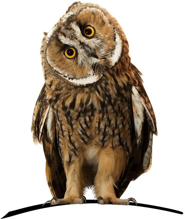 Wise owl - HelpAdmin Virtual Assistant Perth WA Australia